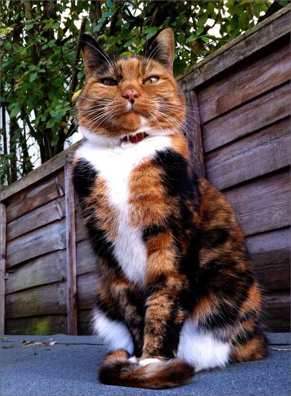 dapper_cat1 - Iring Nga May Pagka Liwat Sa Tag-iya - Photos Unlimited